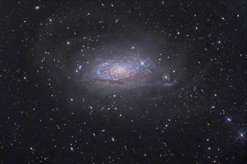 Messier 63 (image Tony Hallas)